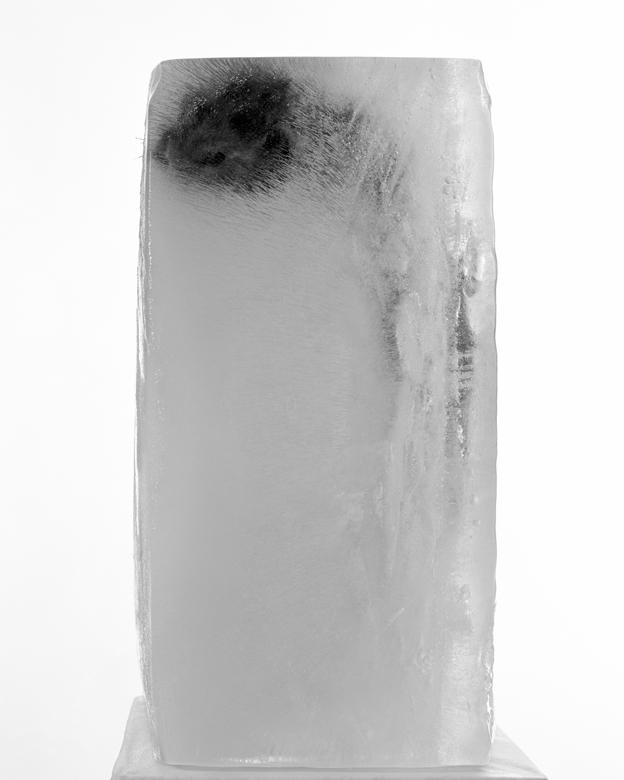 La Conservation des espèces – Cryogénie – Belette.