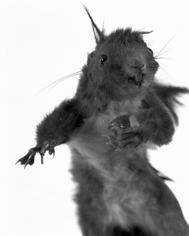La Conservations des espèces – Portrait – Ecureuil.